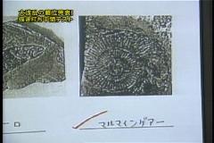 Wbc026